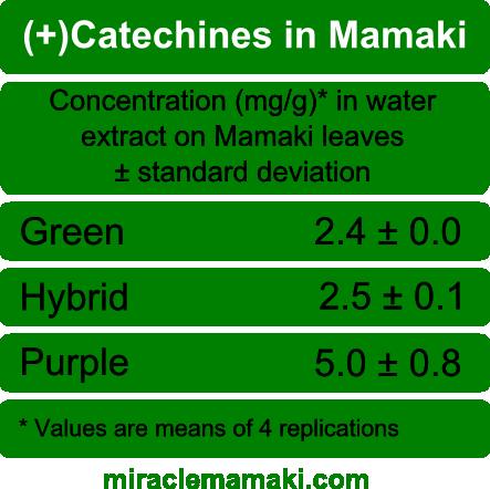 Catachines in Mamaki Tea